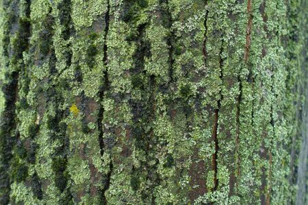 Moss and lichen covering uneven surface of tree bark