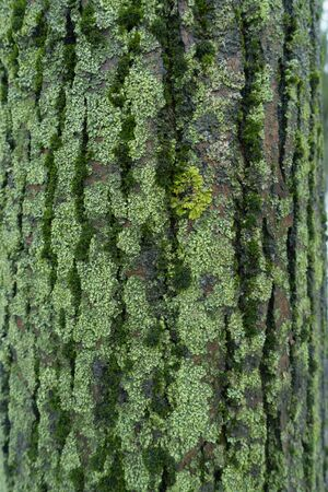 Multicolored lichen and moss covering surface of tree bark