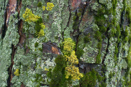 Moss and multicolored lichen on wet tree bark