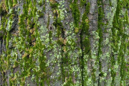 Multicolored moss and lichen on tree bark in winter