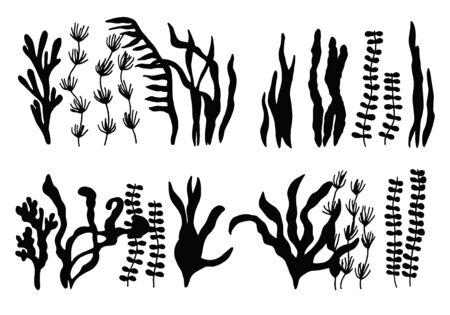 algae edible marine food set. isolated objects