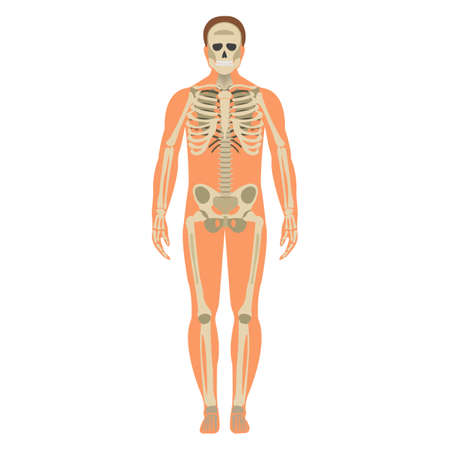 Skeleton wuth Body icon. Human Skeleton front side Silhouette. Isolated on White Background. Vector illustration.