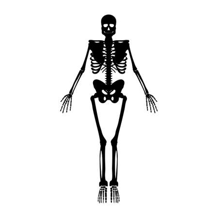 Skeleton icon. Human Skeleton front side Silhouette. Isolated on White Background. Vector illustration. Illustration