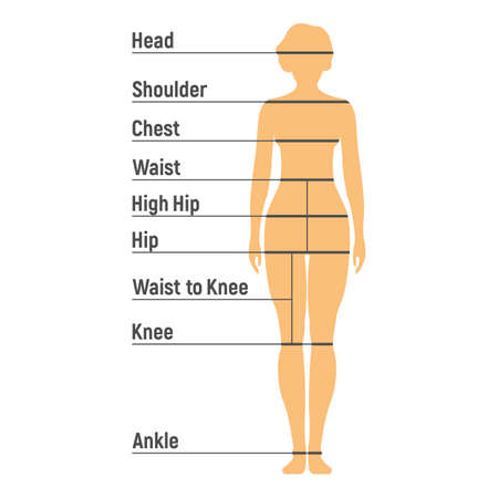 Woman Size Chart. Human front side Silhouette. Isolated on White Background. Vector illustration. Illustration