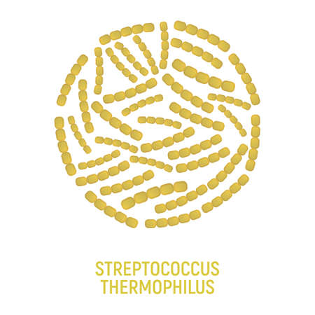 Streptococcus Thermophilus Icon. Probiotic Concept and Label. Health Research Symbol, Icon and Badge. Cartoon Vector illustration.