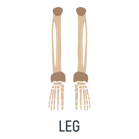Leg bone, x-ray concept icon, roentgen human body image isolated on white, flat vector illustration. Skeleton part of man organism, silhouette black biological science. Vettoriali