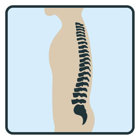 Spine backbone bone, x-ray concept icon, roentgen human body image isolated on white, flat vector illustration. Skeleton part of man organism, silhouette black biological science.