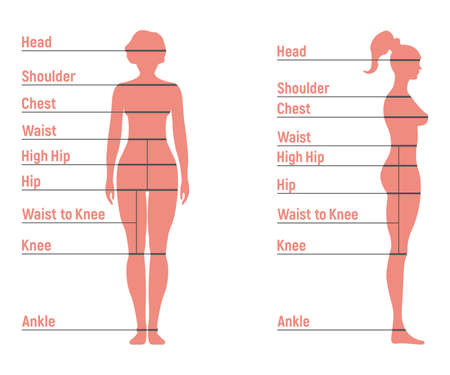 Female size chart anatomy human character, people dummy front and view side body silhouette, isolated on white, flat vector illustration. Cartoon woman mannequin people dimension scale.