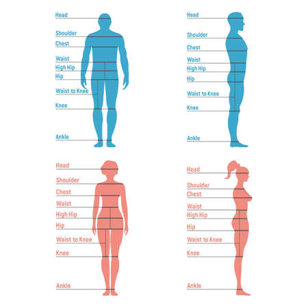 Male and female size chart anatomy human character, people dummy front and view side body silhouette, isolated on white, flat vector illustration. Cartoon mannequin people dimension scale.