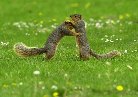 Squirrel Dance Фото со стока