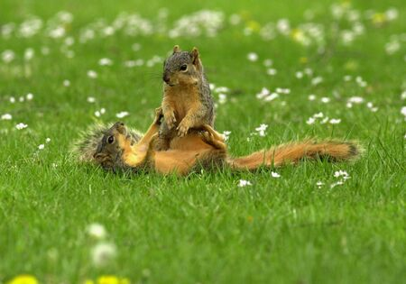 Squirrel Play
