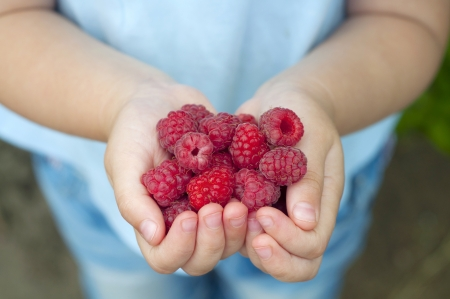 produces: Ripe red raspberries in the little children
