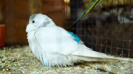 Most Beautiful White Parrot