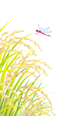 Rice field, isolated on the white background Illustration