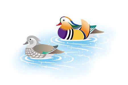 paréntesis de patos mandarines