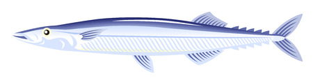 pacific ocean: The pacific saury on the white background