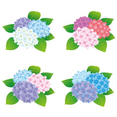 色鮮やかなアジサイの花アイコン