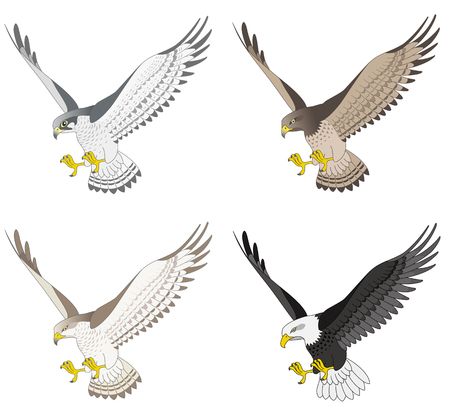 Eagle and hawk and falcon, isolated on white background