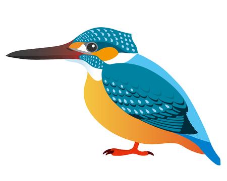 Kingfisher, isolated on white background