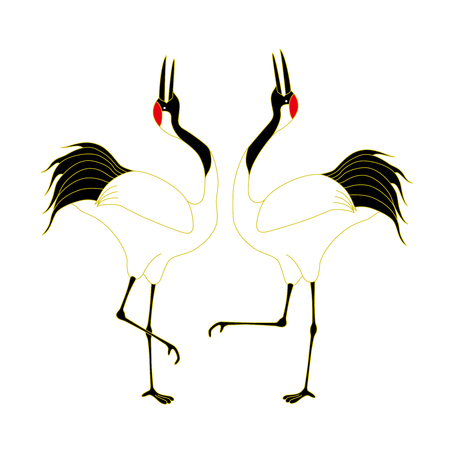 Courtship dancing brace of red-crested white cranes, isolated on white background.