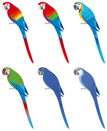 Colorful macaws, isolated on white background