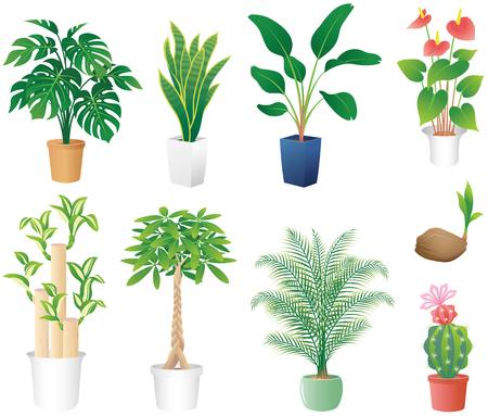 Houseplants vector illustration Illustration