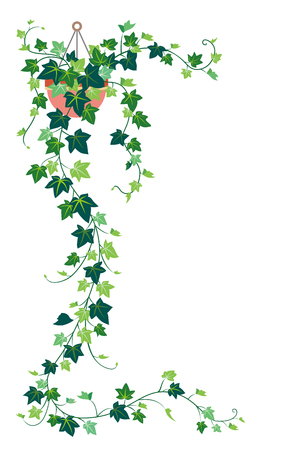 Ivy, isolated on the white background