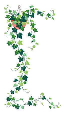 Ivy, isolated on the white background Zdjęcie Seryjne - 86301272