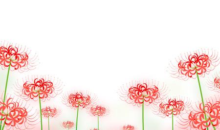 hurricane lily flowers