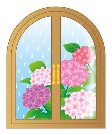 Hydrangea flowers through the window, isolated on white background. Illustration