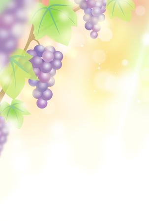 ve: Grape vine background material