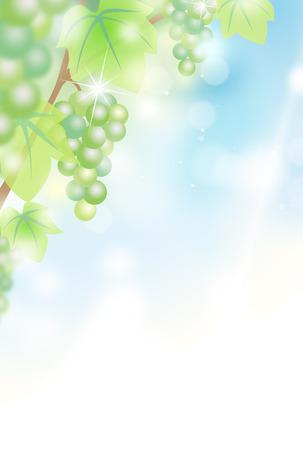 Grape vine background material