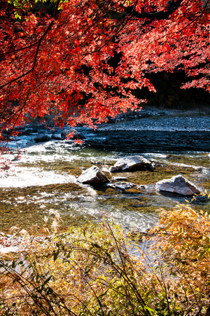 red maple leaves beside a mountain stream Stock Photo