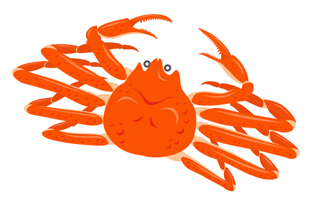 snow crab isolated on the white background.