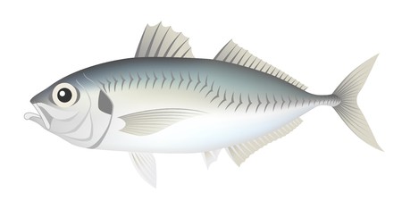 The horse mackerel, isolated on the white background.