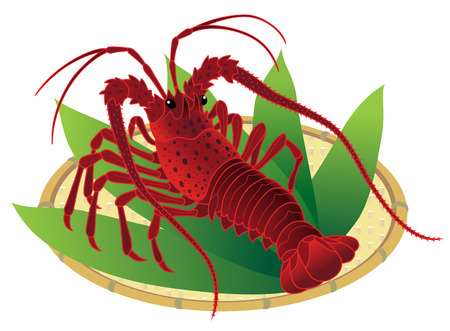 Japanese spiny lobster on a bamboo basket, isolated on the white background.