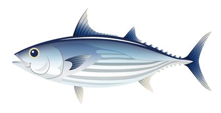 The bonito fish ,  isolated on the white background. Illustration