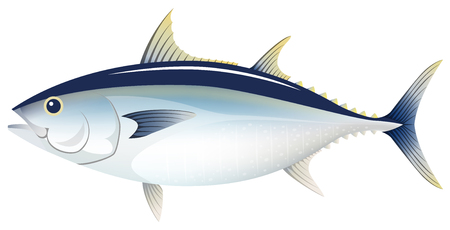 The tuna, isolated on the white background.
