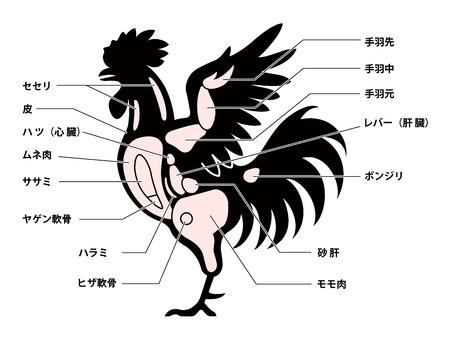 Chicken cuts diagram Illustration