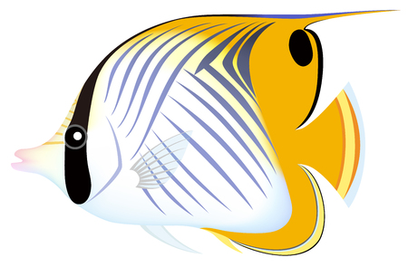 The threadfin butterflyfish, isolated on the white background. Illustration