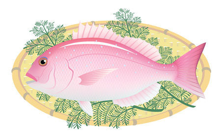 The red sea bream on a bamboo basket, isolated on the white background. Çizim