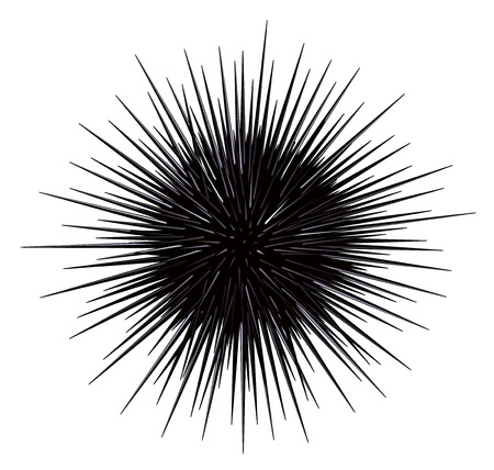 Sea urchin isolated on the white background Ilustrace