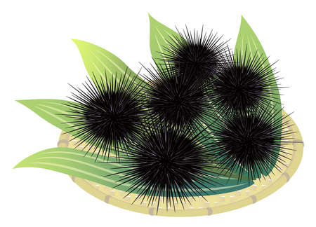 Sea urchins on a bamboo basket, isolated on the white background Illustration