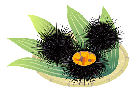 Sea urchins on a bamboo basket, isolated on the white background Stok Fotoğraf - 112396616