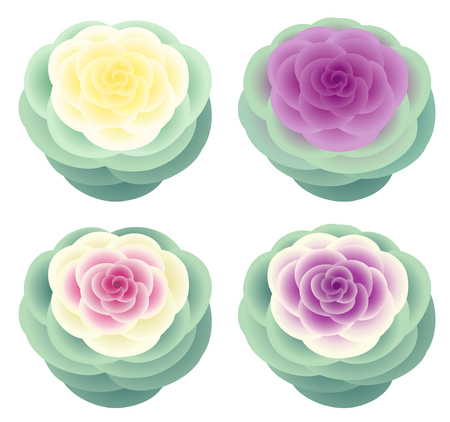 Colorful ornamental kales, isolated on white background. Stok Fotoğraf - 117690680