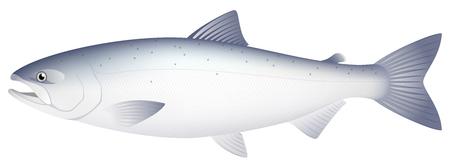 The salmon, isolated on the white background Stok Fotoğraf - 117690685