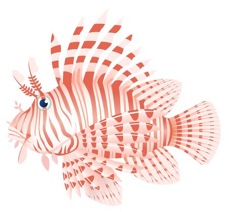 Luna lionfish, isolated on the white background.