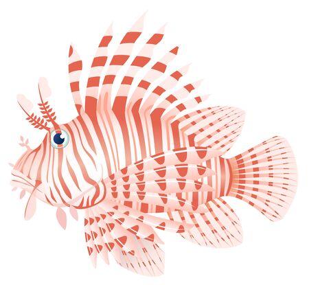 Luna lionfish, isolated on the white background.