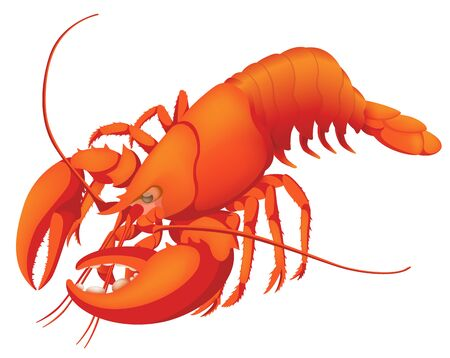 Red Boiled Lobster, Isolated on the White Background Illusztráció