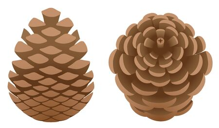 Pine cones isolated on the white background Stock Illustratie